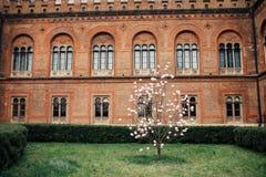 Jardín del campus universitario con el árbol de la magnolia fotografía de archivo