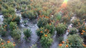 jardín del cielo y jardín de flores naturales verdes hermosos de las imágenes del beautufull foto de archivo