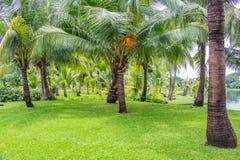 Jardín del coco Fotos de archivo libres de regalías