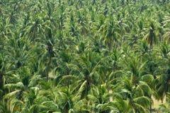 Jardín del coco o de la palma en la isla tropical Foto de archivo libre de regalías