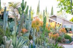Jardín del desierto con los succulents Fotografía de archivo