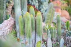 Jardín del desierto con los succulents Fotografía de archivo libre de regalías