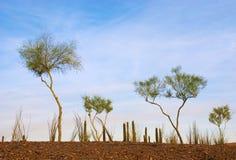 Jardín del desierto de árboles larguiruchos foto de archivo libre de regalías