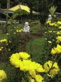 Jardín del Gerbera Foto de archivo libre de regalías