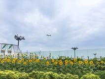 Jardín del girasol foto de archivo