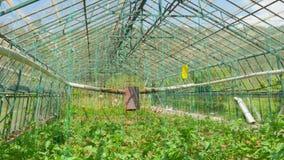 Jardín del invernadero, interior metrajes
