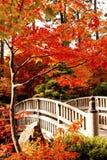 Jardín del japonés del otoño Foto de archivo libre de regalías
