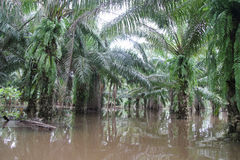 Jardín del juego en la inundación masiva, Fotografía de archivo