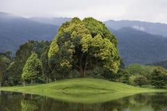 Jardín del lago Imagenes de archivo