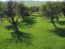 Jardín del manzano Imagenes de archivo