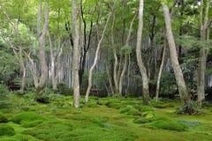 Jardín del musgo en Japón Fotografía de archivo