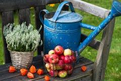 Jardín del otoño Imagen de archivo libre de regalías