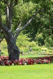 Jardín del parque Imágenes de archivo libres de regalías