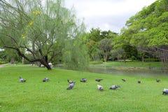 Jardín del parque en verano Fotografía de archivo libre de regalías