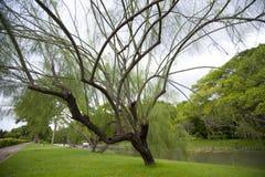 Jardín del parque en verano Foto de archivo