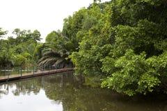 Jardín del parque en verano Imágenes de archivo libres de regalías