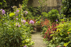 Jardín del patio trasero Fotografía de archivo