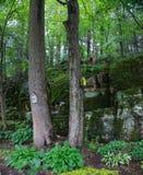 Jardín del patio trasero con la repisa rocosa Fotografía de archivo