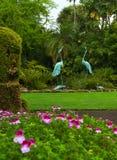 Jardín del Pelargonium Fotos de archivo libres de regalías