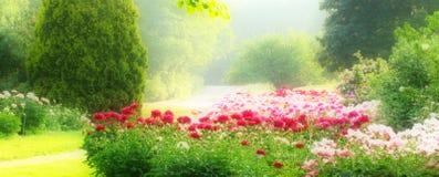 Jardín del Peony Foto de archivo
