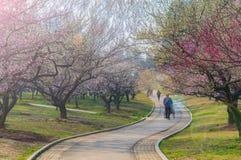 Jardín del plumblossom de Donghu en primavera Imagen de archivo libre de regalías