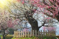 Jardín del plumblossom de Donghu en primavera Foto de archivo