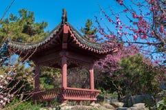 Jardín del plumblossom de Donghu en primavera Fotos de archivo libres de regalías