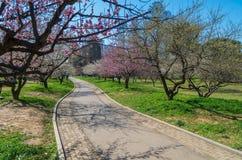 Jardín del plumblossom de Donghu en primavera Fotografía de archivo libre de regalías