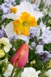 Jardín del resorte Imagen de archivo libre de regalías