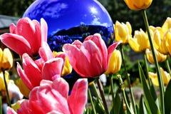 Jardín del tulipán de Skagway Foto de archivo libre de regalías