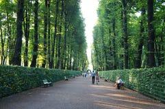 Jardín del verano de St Petersburg Foto de archivo libre de regalías