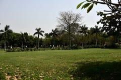 Jardín en el templo de la India Lotos Fotos de archivo