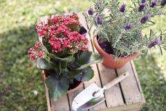 Jardín en el tiempo de verano Foto de archivo libre de regalías