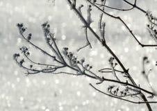 Jardín en invierno Imagenes de archivo