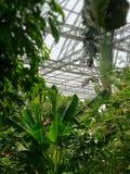Jardín en la bóveda del jardín y del Insectarium de la mariposa de Bangkok foto de archivo libre de regalías