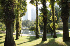 Jardín en la ciudad con luz del sol de la mañana Fotografía de archivo