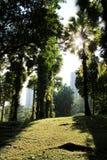 Jardín en la ciudad con luz del sol de la mañana Fotos de archivo libres de regalías