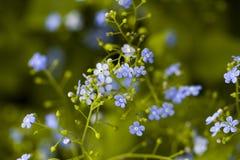 Jardín en la floración Imágenes de archivo libres de regalías