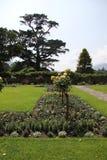 Jardín en la floración Foto de archivo