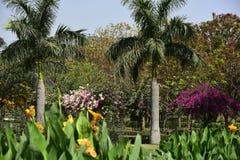 Jardín en la India fotografía de archivo libre de regalías