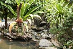 Jardín en mi hogar por la mañana Imagen de archivo libre de regalías