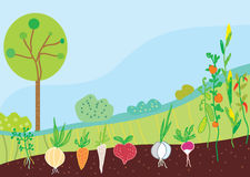 Jardín en primavera con las verduras Imagen de archivo