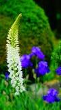 Jardín en primavera en un día soleado Imagen de archivo libre de regalías