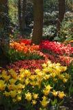 Jardín en resorte con las porciones de tulipanes fotografía de archivo libre de regalías