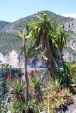 Jardín exótico Fotos de archivo libres de regalías