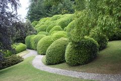 Jardín extraño Imagen de archivo