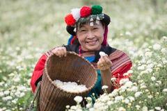 Jardín feliz del crisantemo de la tribu de la colina de la sonrisa Imagen de archivo libre de regalías