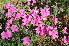 Jardín floral floreciente del patio de la tranquilidad de las naturalezas imágenes de archivo libres de regalías