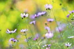Jardín floral hermoso imagen de archivo