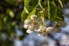 Jardín floreciente Foto de archivo libre de regalías
